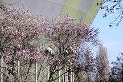 Floral kaschiert