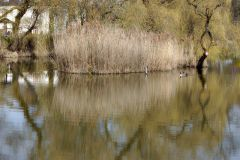 12-IMG_5384_Sgn