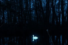 CYGNUS-┬®-loomaland.com_Luminale2020